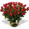 Florería a Domicilio: Arreglos Florales, Rosas Ecuatorianas y Ramos de Flor